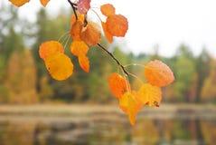 Κίτρινος το φύλλο Στοκ εικόνα με δικαίωμα ελεύθερης χρήσης
