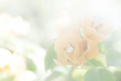 Κίτρινος τρύγος λουλουδιών με το άσπρο φίλτρο Στοκ εικόνα με δικαίωμα ελεύθερης χρήσης
