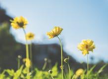 Κίτρινος τρύγος λουλουδιών Στοκ φωτογραφία με δικαίωμα ελεύθερης χρήσης