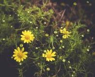 Κίτρινος τρύγος λουλουδιών Στοκ Εικόνα