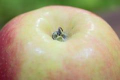 Κίτρινος - χρωματισμένη ροζ λεπτομερής μήλο σύσταση κοντά επάνω στοκ φωτογραφία