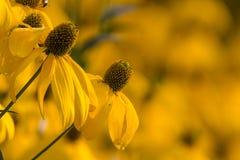 Κίτρινο άνθος Στοκ Εικόνα