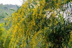 Κίτρινο άνθος Στοκ εικόνα με δικαίωμα ελεύθερης χρήσης