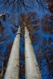 Κίτρινο δάσος Στοκ φωτογραφία με δικαίωμα ελεύθερης χρήσης