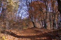 Κίτρινο δάσος Στοκ φωτογραφίες με δικαίωμα ελεύθερης χρήσης