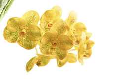 Κίτρινο άσπρο υπόβαθρο λουλουδιών ορχιδεών Στοκ φωτογραφίες με δικαίωμα ελεύθερης χρήσης