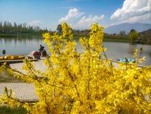 Κίτρινο δέντρο λουλουδιών Στοκ φωτογραφία με δικαίωμα ελεύθερης χρήσης