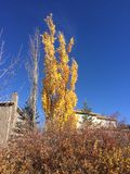 Κίτρινο δέντρο φθινοπώρου και σύγχρονο σπίτι στοκ φωτογραφία με δικαίωμα ελεύθερης χρήσης
