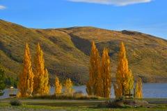 Κίτρινο δέντρο φύλλων φθινοπώρου με το υπόβαθρο της μεγάλης φύσης Στοκ Φωτογραφίες