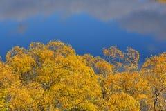 Κίτρινο δέντρο φύλλων φθινοπώρου με το υπόβαθρο της μεγάλης φύσης Στοκ Εικόνες