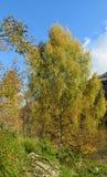 Κίτρινο δέντρο φύλλων φθινοπώρου Στοκ φωτογραφία με δικαίωμα ελεύθερης χρήσης