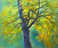 Κίτρινο δέντρο Στοκ εικόνες με δικαίωμα ελεύθερης χρήσης