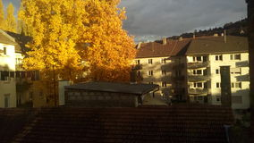 Κίτρινο δέντρο Στοκ Εικόνα