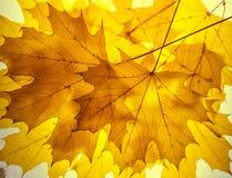 Κίτρινο αναδρομικά φωτισμένο υπόβαθρο φύλλων σφενδάμου φθινοπωρινή διακόσμηση Στοκ εικόνα με δικαίωμα ελεύθερης χρήσης