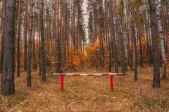 Κίτρινο δασικό εμπόδιο φθινοπώρου Στοκ φωτογραφία με δικαίωμα ελεύθερης χρήσης