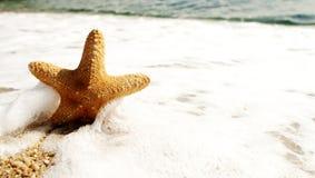 Κίτρινο αστέρι θάλασσας στον αφρό κυμάτων Στοκ Εικόνα