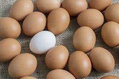 Κίτρινο αυγό κοτόπουλου και το λευκό στη μέση στοκ εικόνες