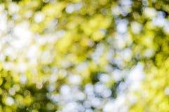 Κίτρινο αφηρημένο ελαφρύ υπόβαθρο bokeh, πολύ δασικό bokeh Στοκ Φωτογραφία