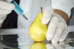 Κίτρινο αχλάδι στο εργαστήριο γενετικής εφαρμοσμένης μηχανικής Στοκ Φωτογραφία