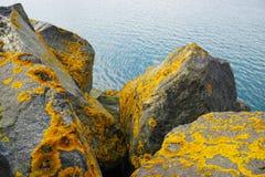 Κίτρινο βρύο Στοκ Φωτογραφία