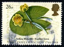 Κίτρινο γραμματόσημο Waterlily UK Στοκ φωτογραφία με δικαίωμα ελεύθερης χρήσης
