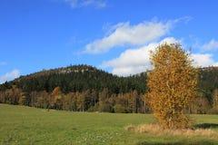 Κίτρινο δέντρο φθινοπώρου με τους βράχους στην ανασκόπηση Στοκ φωτογραφία με δικαίωμα ελεύθερης χρήσης