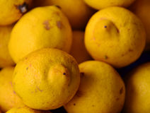 Κίτρινο λεμόνι Στοκ Φωτογραφία