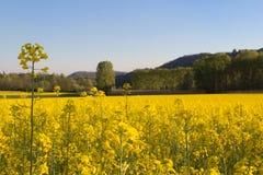 Κίτρινο ελατήριο στοκ φωτογραφία με δικαίωμα ελεύθερης χρήσης