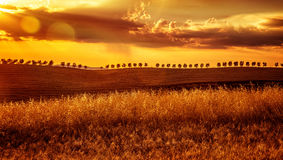Κίτρινο ηλιοβασίλεμα πέρα από το καλλιεργήσιμο έδαφος Στοκ Φωτογραφίες