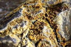 Κίτρινο θείο στο βράχο Στοκ εικόνες με δικαίωμα ελεύθερης χρήσης