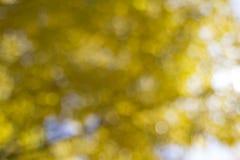 Κίτρινο θολωμένο φύλλωμα υπόβαθρο πτώσης Στοκ Εικόνες