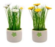 Κίτρινο και άσπρο λουλούδι λ artificia άνοιξη στο διακοσμητικό δοχείο που απομονώνεται Στοκ φωτογραφία με δικαίωμα ελεύθερης χρήσης