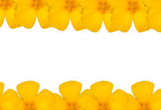 κίτρινο και άσπρο υπόβαθρο λουλουδιών Στοκ Εικόνα