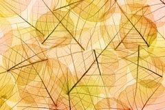 Κίτρινο και πορτοκαλί υπόβαθρο φύλλων φθινοπώρου Στοκ Εικόνα