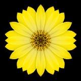 Κίτρινο καλειδοσκόπιο Mandala λουλουδιών που απομονώνεται στο Μαύρο Στοκ φωτογραφίες με δικαίωμα ελεύθερης χρήσης