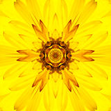 Κίτρινο κεντρικό καλειδοσκόπιο λουλουδιών Mandala ομόκεντρο Στοκ Εικόνα