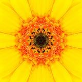 Κίτρινο κεντρικό καλειδοσκόπιο λουλουδιών Mandala ομόκεντρο Στοκ φωτογραφία με δικαίωμα ελεύθερης χρήσης