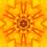 Κίτρινο κεντρικό καλειδοσκόπιο λουλουδιών Mandala ομόκεντρο Στοκ φωτογραφίες με δικαίωμα ελεύθερης χρήσης