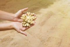 Κίτρινο κομμάτι θάλασσας του κοραλλιού στο χέρι Προστασία του θαλάσσιου περιβάλλοντος στοκ φωτογραφία