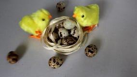 Κίτρινο κοτόπουλο δύο κοντά στα αυγά Ένα κοτόπουλο τρέχει και ραμφίζει φιλμ μικρού μήκους