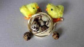 Κίτρινο κοτόπουλο δύο κοντά στα αυγά Ένα κοτόπουλο τρέχει και ραμφίζει απόθεμα βίντεο
