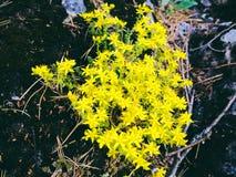Κίτρινο κρεβάτι λουλουδιών Στοκ φωτογραφία με δικαίωμα ελεύθερης χρήσης