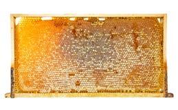 Κίτρινο κυψελωτό πλαίσιο στοκ εικόνα με δικαίωμα ελεύθερης χρήσης