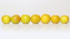 Κίτρινο, κυδώνι φθινοπώρου στα διάφορα Στοκ εικόνες με δικαίωμα ελεύθερης χρήσης