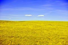 Κίτρινο λιβάδι Στοκ Φωτογραφίες