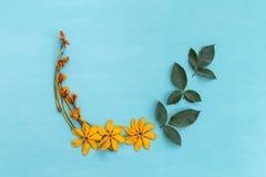 Κίτρινο λουλούδι με την πράσινη ρύθμιση φύλλων Στοκ Φωτογραφία