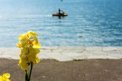Κίτρινο λουλούδι μπροστά από τη λίμνη με τις αντανακλάσεις ναυσιπλοΐας και νερού βαρκών στο lago ascona maggiore Στοκ φωτογραφίες με δικαίωμα ελεύθερης χρήσης