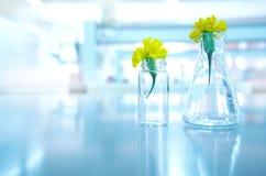 Κίτρινο λουλούδι στη φιάλη γυαλιού και φιαλίδιο στην επιστήμη φυτών της βιολογίας στοκ φωτογραφία με δικαίωμα ελεύθερης χρήσης