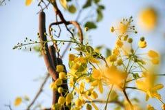 Κίτρινο λουλούδι του καλοκαιριού στοκ φωτογραφίες