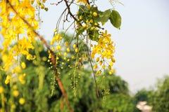 Κίτρινο λουλούδι του καλοκαιριού στοκ εικόνες